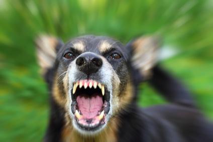 犬が吠える場合の対処と改善!苦情の前にやめさせる方法4つ