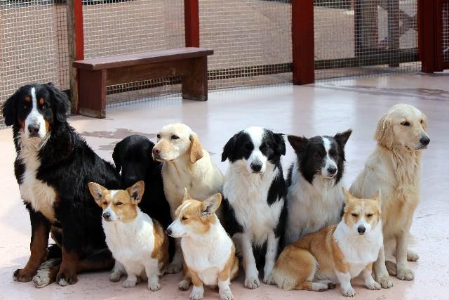 犬 多頭飼い