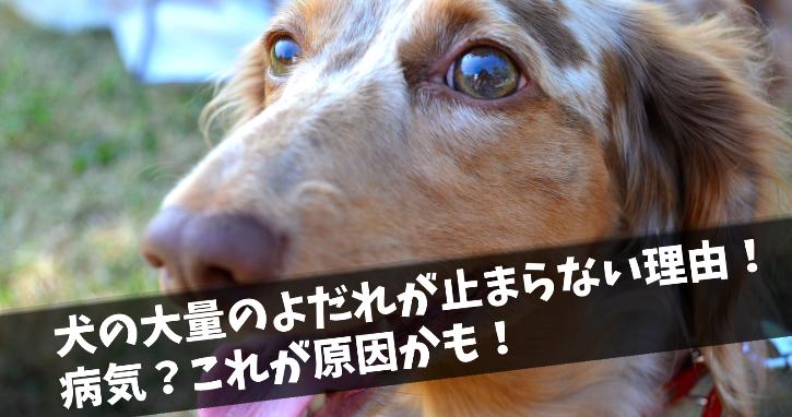 犬の大量のよだれが止まらない理由!病気?これが原因かも!