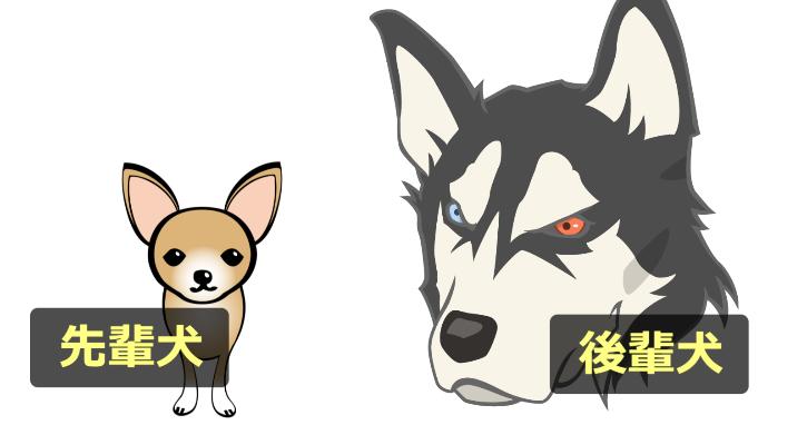 先輩犬と後輩犬