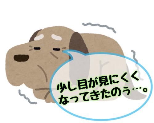 犬の白内障の初期症状!早期発見で進行を遅らせる