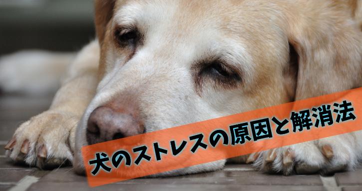 犬のストレスは甘やかすほど強くなる?原因と解消法まとめ
