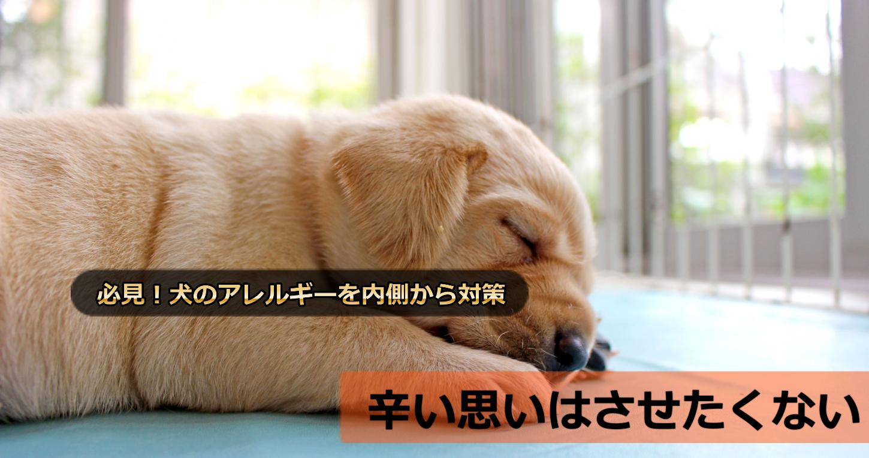 犬のアレルギーの主な原因3つ!アレルゲンを排除する方法