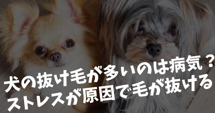 犬の抜け毛が多いのは病気?ストレスが原因で毛が抜ける