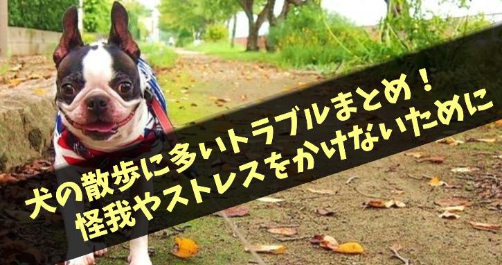 犬の散歩に多いトラブルまとめ!怪我やストレスをかけないために