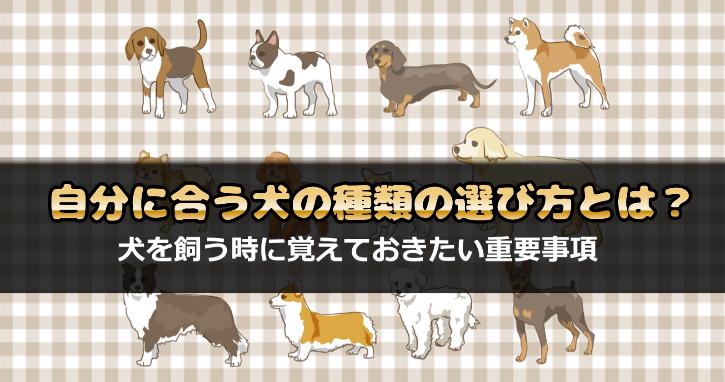 犬の種類の選び方
