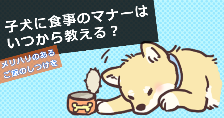 子犬に食事のマナーはいつから教える?メリハリのあるご飯のしつけを!