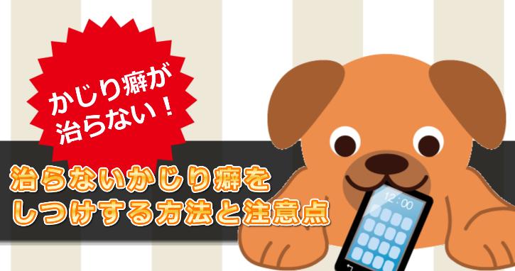 犬が家の物をすぐにかじる原因!治らないかじり癖をしつけする方法と注意点