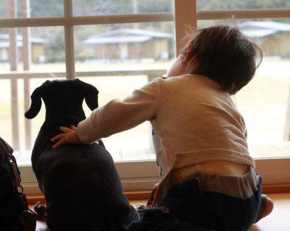 犬と一緒に外を見る子供