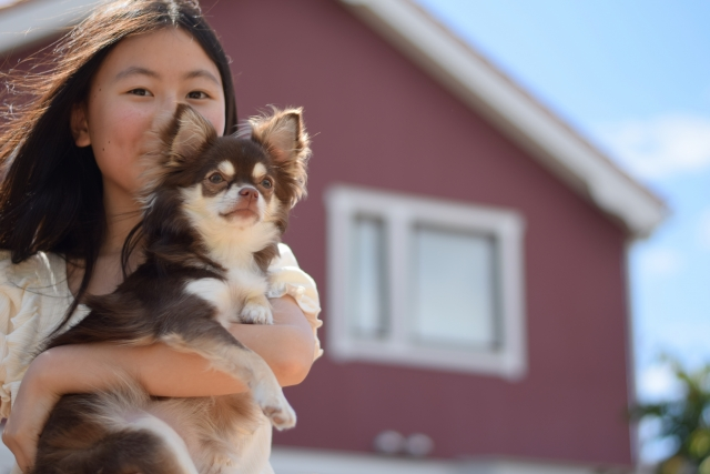 抱っこされて外を散歩する犬