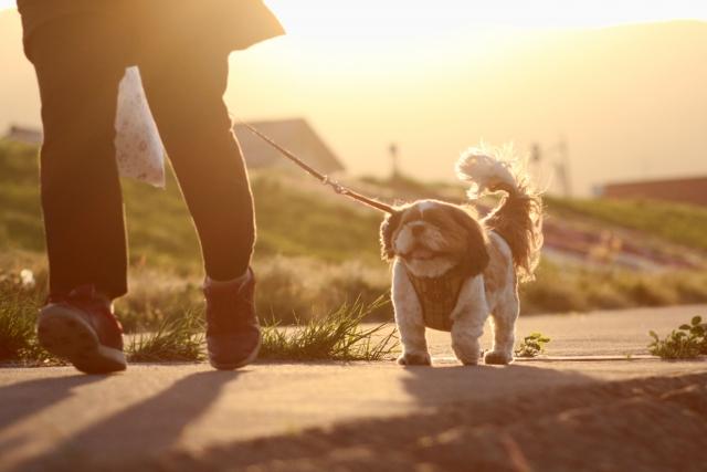飼い主の横を上手に歩く犬