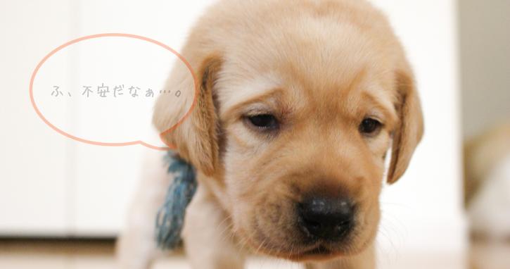 うちの犬の性格は臆病かも。その特徴と上手に付き合っていく方法
