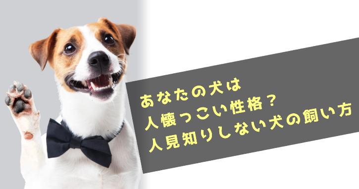 あなたの犬は人懐っこい性格?人見知りしないのは良いことばかりではありません