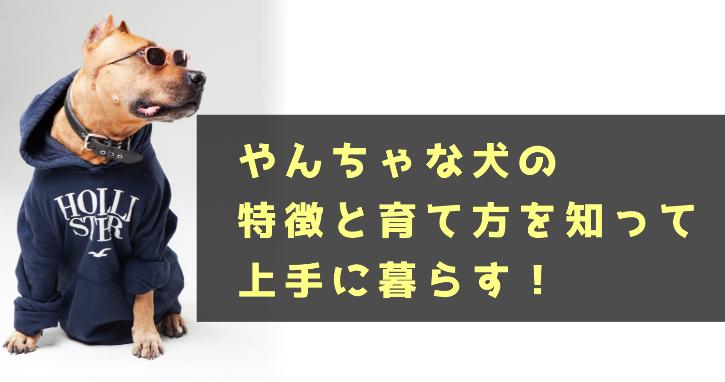 あなたの犬の性格はやんちゃ?特徴と育て方を知って上手に暮らす!