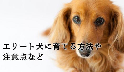 頭の良い犬をさらに賢く!エリート犬に育てる方法や注意点など