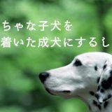 【簡単】やんちゃな子犬を落ち着いた成犬にするトレーニングのコツ