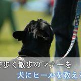 犬にヒール(つけ)のコマンドを教えるコツ!並んで歩く散歩のマナーを