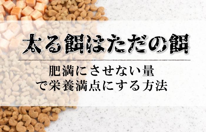 太る餌はただの餌!犬を肥満にさせないエサの量で栄養満点のご飯を実現する方法!