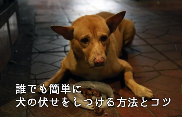 意外と難しい犬の伏せ!誰でも簡単に犬の伏せをしつける方法とコツ