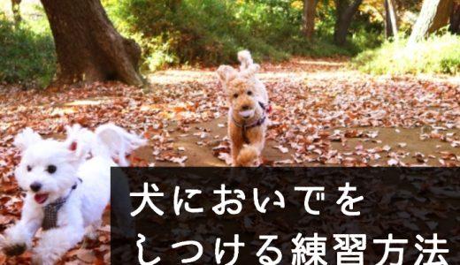簡単!犬においで(呼び戻し)をしつける為の練習方法と手順をわかりやすく!