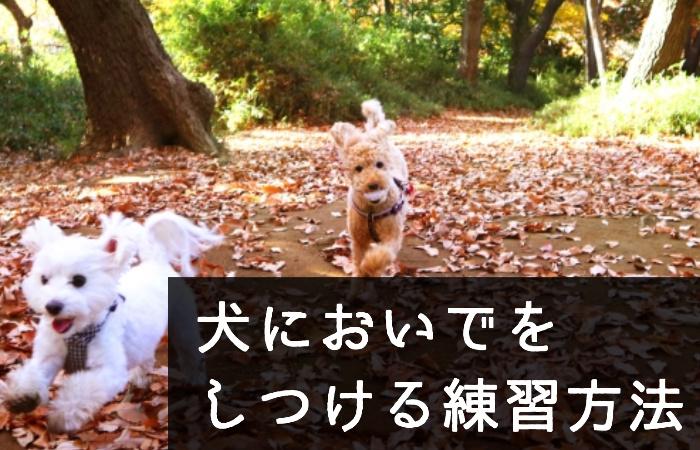簡単!犬においで(呼び戻し)をしっかりとしつける練習方法と手順をわかりやすく!