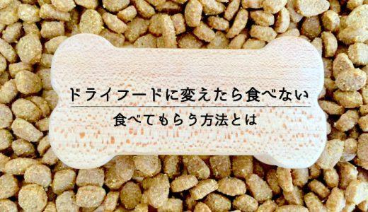 犬のご飯をドライフード(カリカリ)に切り替えたら食べない。食べてもらう方法とは!?