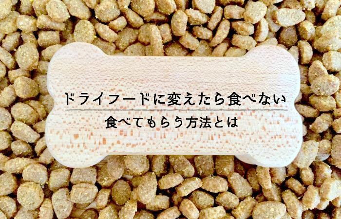 犬のご飯をドライフード(カリカリ)に変えたら食べない。食べてもらう方法とは!